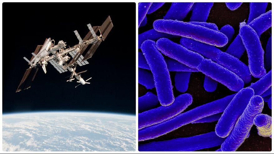 آیا تکسلولیهای ایستگاه فضایی بینالمللی فرازمینی هستند؟