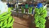 Африка просит ЕС защитить её бананы