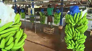 Ακτή Ελεφαντοστού: 380 εκατομμύρια θέσεις εργασίας έως το 2030
