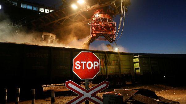 فرانسه: قارچهای روس به رادیواکتیو آلوده هستند