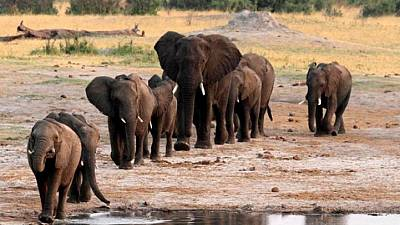 Namibia: 57, 000 sign petition against Elephant hunting