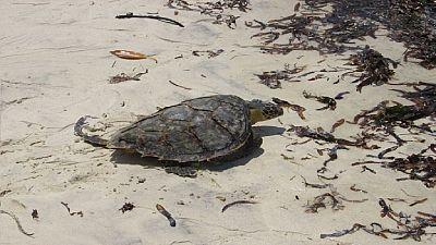 Kenya: ces déchets plastiques qui menacent la vie des tortues marines