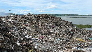 Journée mondiale des sols : comment guérir les sols des sacs plastiques ?