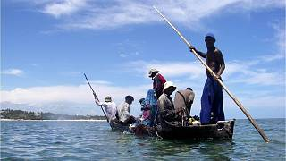 Protecting corals and mangroves, Kenya's fishermen net cash and more fish
