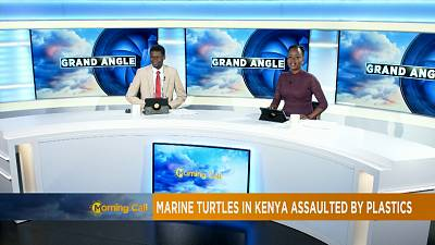 Turtles in Kenya assaulted by plastics [The Morning Call]