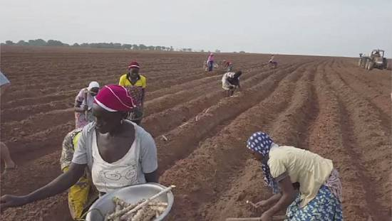 ECOWAS, and partners want protection of women's rights in Agriculture
