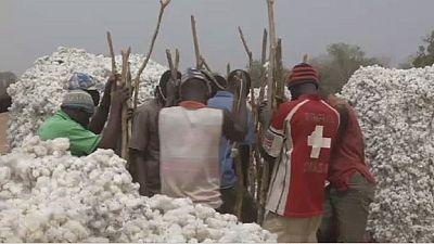 Burkina : le coton transgénique et ses conséquences sur la production