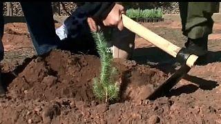 Le Maroc lutte contre la déforestation [no comment]