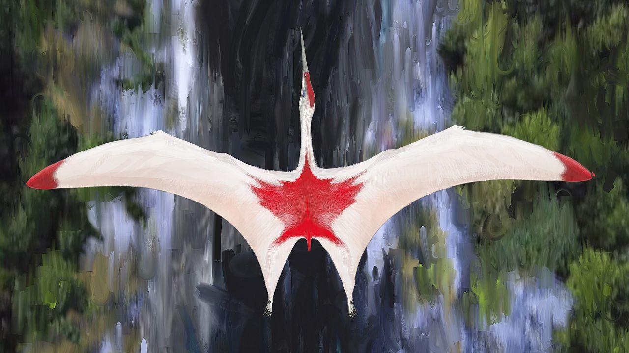 Cryodrakon boreas had a wingspan of up to 33 feet