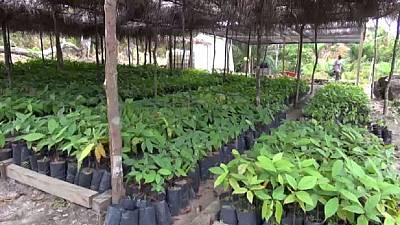 Gabon hopes to attain self food sufficiency by embarking on an ambitious agric program