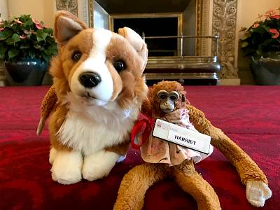 Harriet the Monkey with her new friend, Rex the Corgi, at Buckingham Palace.