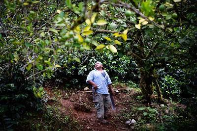 Rodrigo Carrillo Ordonez, 48, walks under a fruit tree on the property filled with his many coffee plants in May. He said he would be going to the U.S. because he cannot make money to provide for himself and his family with his coffee plants.