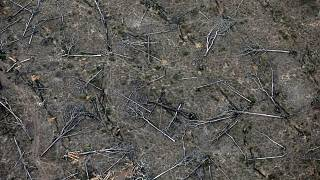 Image: An aerial view shows a deforested plot of the Amazon near Porto Velh