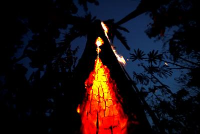 A burning tree in an area of the Amazon rainforest in Itapua do Oeste, Rondonia State, Brazil, last week.