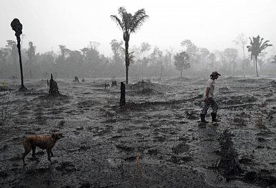 Brazilian farmer Helio Lombardo Do Santos and a dog walk through a burnt area of the Amazon rainforest, in the Rondonia state, Brazil.