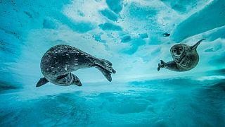 Underwater with Blancpain