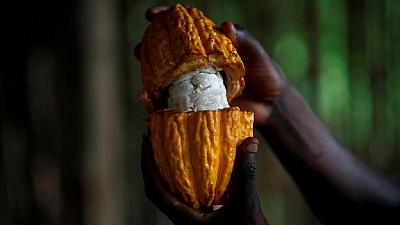 Ivorian cocoa farmers concerned with hot and dry weather