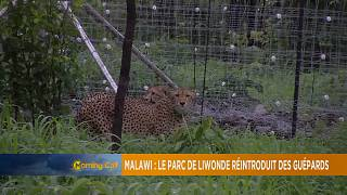 Malawi: Cheetah conservation at Liwonde National Park [The Morning Call]