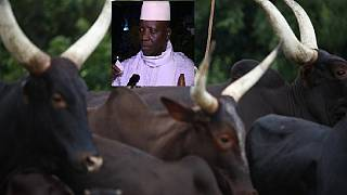 Sale of Jammeh's cattle, other assets: Party fights govt commission