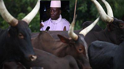 Gambie : les biens de Yahya Jammeh au cœur d'une polémique