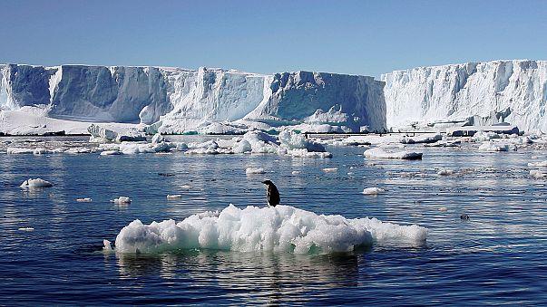 Unsere Reportage vom Südpol: Gletscherschmelze in der Antarktis