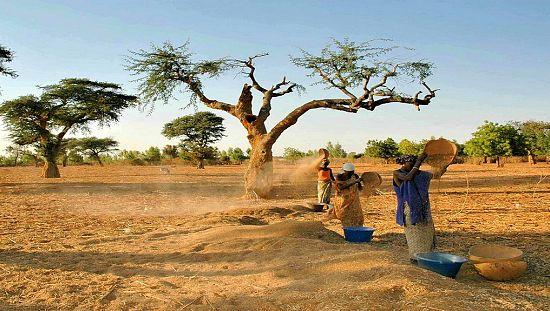 Sénégal : des femmes devenues autonomes grâce à l'agriculture