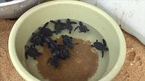 Benin: National day for sea turtles  [No Comment]