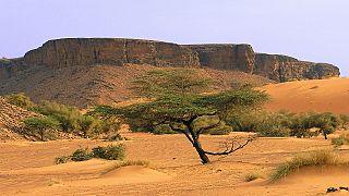 Sahara mauritanien : retour des touristes pourrait rimer avec espoir de paix
