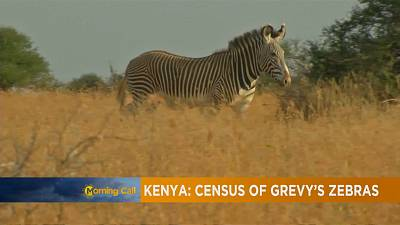 Kenya conducts census of Grevy's zebras [The Morning Call]