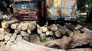Tuerie en Casamance : le bilan monte à 14 morts (armée)