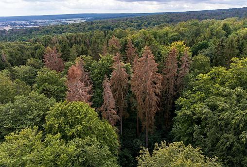 Image: East Germany's Hainich forest, Sept. 5, 2019.
