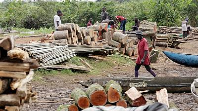 Tuerie en Casamance : le Sénégal suspend toutes les autorisations de coupe de bois