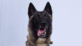 hero-dog-trump-isis-raid-today-main-191028