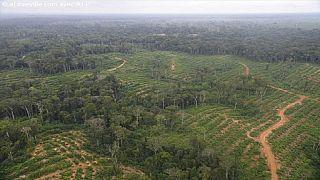 Gabon : « l'or rouge » pour résister aux caprices de l'or noir