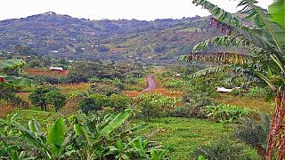 Cameroun : un gendarme tué dans le nord-ouest anglophone