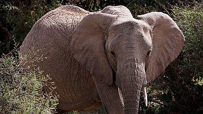 Bénin : le parc national de la Pendjari reprend vie