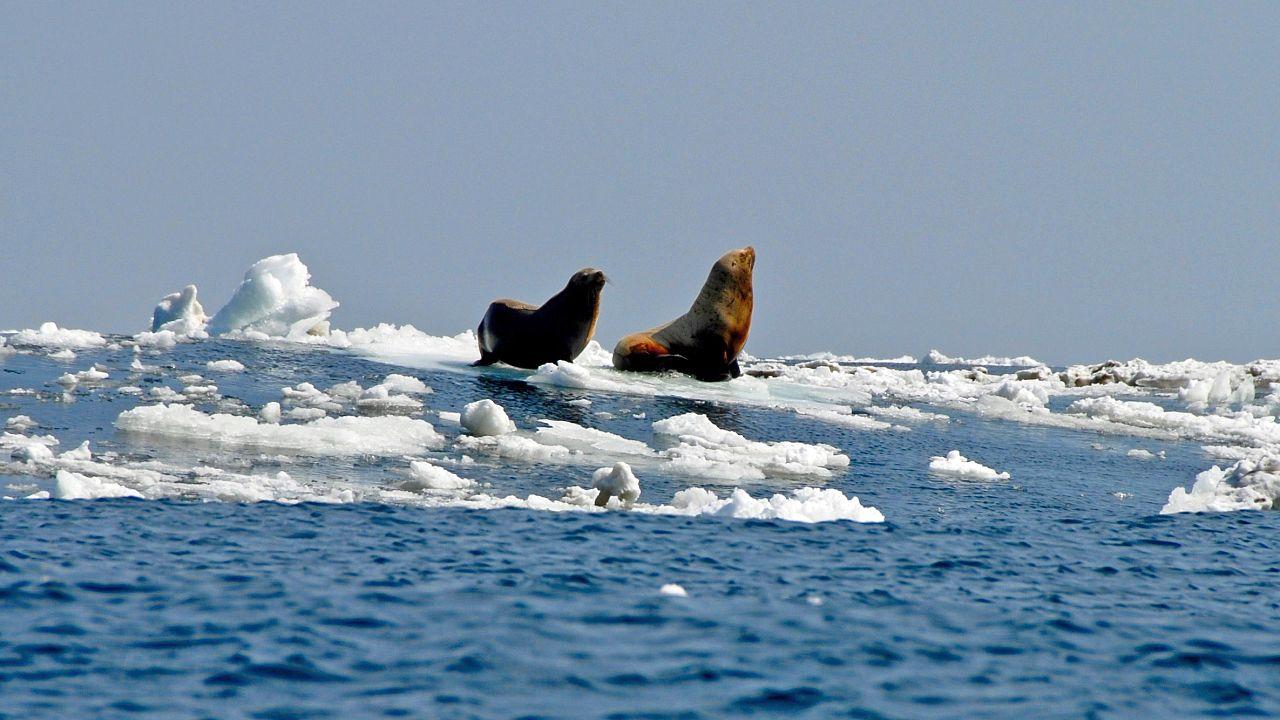 Image: Sea lions