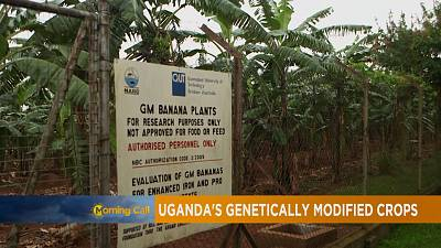 Uganda's GMO crops and acceptance [The Morning Call]