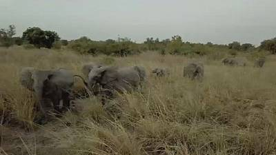 Pendjari National park in Benin bounces back to life