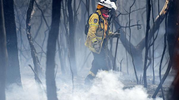 Image: A NSW RFS firefighter undertakes mopping up at South Turramurra on N