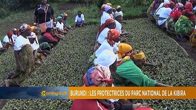 Kibira national park, Burundi [The Morning Call]