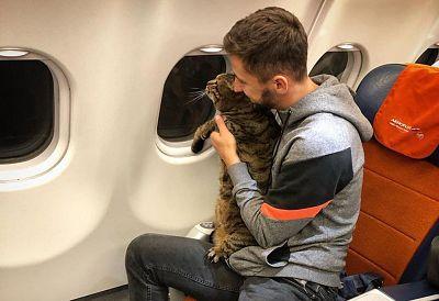 Mikhail Galin with Viktor the cat on board a flight to Vladivostok.
