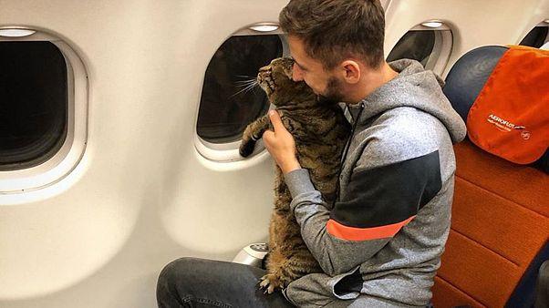 Image: Fat cat on plane