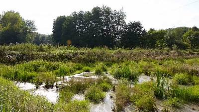 Afrique : préserver les zones humides pour rendre les villes davantage agréables
