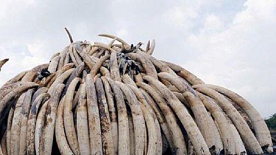 Un expert militant contre le trafic de l'ivoire tué au Kenya