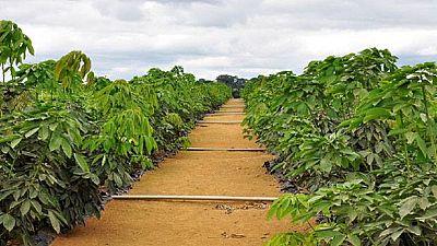 Gabon : promotion de l'autosuffisance alimentaire