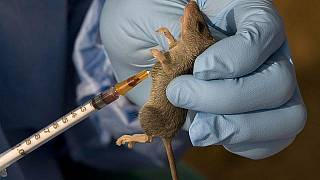 Nigeria lassa fever death toll hits 31, I. Coast takes precautions