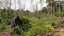 """""""Don't lose the plot"""", la téléréalité qui veut intéresser les jeunes Africains à l'agriculture"""