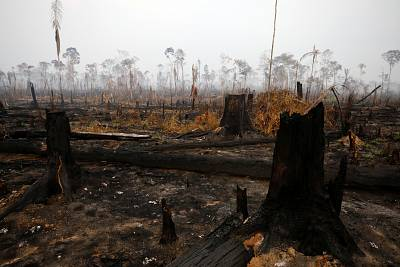 A tract of Amazon jungle is seen after a fire in Boca do Acre, Amazonas state, Brazil on Aug. 24, 2019.