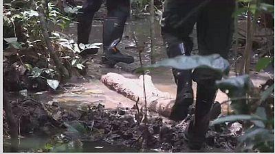 Congo-RDC: le prix de la protection des tourbières